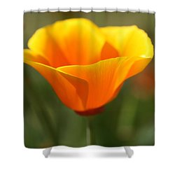 Californian Poppy Shower Curtain by Joy Watson