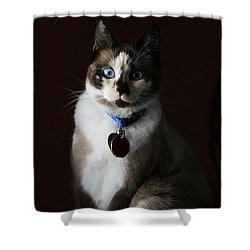 Calista Shower Curtain by Judy Whitton