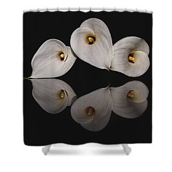 Calla Circle D4423 Shower Curtain by Wes and Dotty Weber