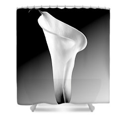 Calla Lily Bw Shower Curtain