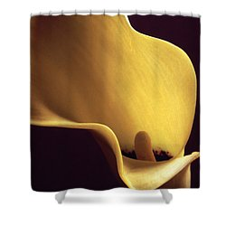 Calla Lily Close Up Shower Curtain by Liz Leyden