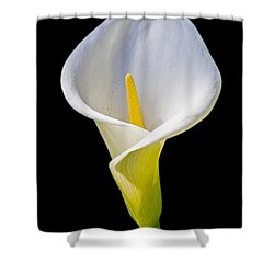 Shower Curtain featuring the photograph Calla Lily by Kate Brown