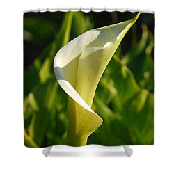 Calla Lily Shower Curtain by Mary Carol Story