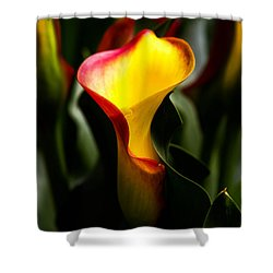 Calla Lily Shower Curtain by Menachem Ganon