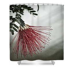 Calliandra Californica Shower Curtain