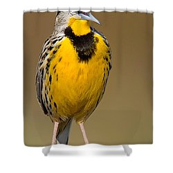 Calling Eastern Meadowlark Shower Curtain by Jerry Fornarotto