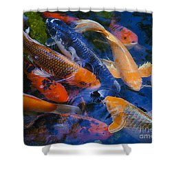 Shower Curtain featuring the photograph Calm Koi Fish by Jerry Cowart