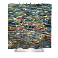 Calming Waters Shower Curtain by Susan  Dimitrakopoulos