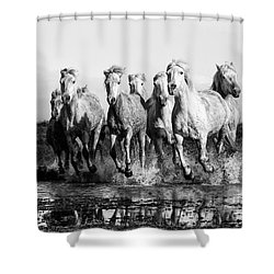 Camargue Horses At The Gallop Bw Shower Curtain