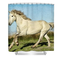 Camargue Stallion Shower Curtain