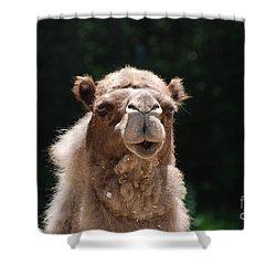 Camel Shower Curtain by DejaVu Designs