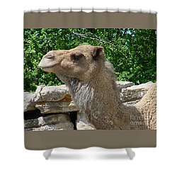 Camel Shower Curtain by Gary Gingrich Galleries