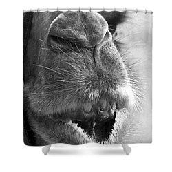 Camel Portrait Shower Curtain by Heiko Koehrer-Wagner