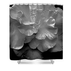 Camelia Shower Curtain by Charlotte Schafer