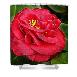 Shower Curtain featuring the photograph Camellia Japonica ' Dixie Knight ' by William Tanneberger