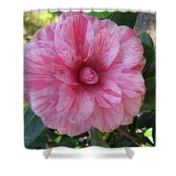 Camellia Japonica II Shower Curtain by Zina Stromberg