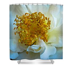 Camellia Shower Curtain by Julie Andel