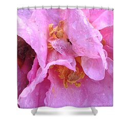 Camellia Parts Shower Curtain by Anna Porter