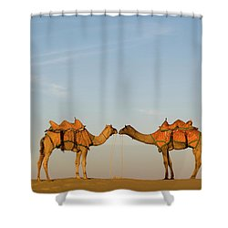 Camels Stand Face To Face In The Thar Shower Curtain
