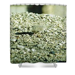 Arizona Camo Bird Shower Curtain by Belinda Lee