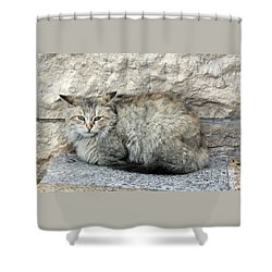 Shower Curtain featuring the photograph Camo Cat by PJ Boylan