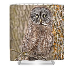 Camouflage-an Owl's Best Friend Shower Curtain