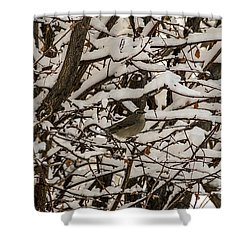 Shower Curtain featuring the photograph Camouflaged Thrush by Sue Smith