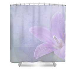 Campanula Portenschlagiana Shower Curtain by John Edwards
