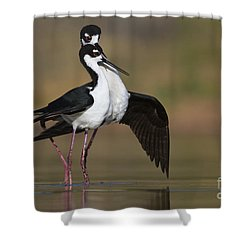 Shower Curtain featuring the photograph Can I Have This Dance by Bryan Keil