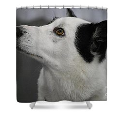 Canaan Dog Shower Curtain