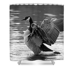Canada Goose Black And White Shower Curtain by Sharon Talson