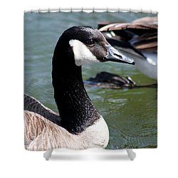 Canada Goose Profile Shower Curtain by Anita Oakley