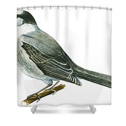 Canada Jay Shower Curtain by Anonymous