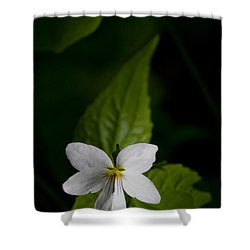 Canada Violet Shower Curtain by Melinda Fawver