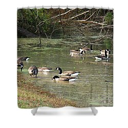 Shower Curtain featuring the photograph Canadian Geese Feeding In Backwaters by William Tanneberger