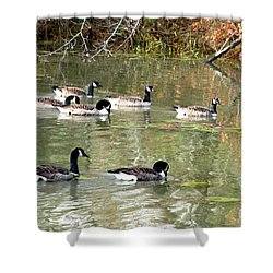Shower Curtain featuring the photograph Canadian Geese Swimming In Backwaters by William Tanneberger