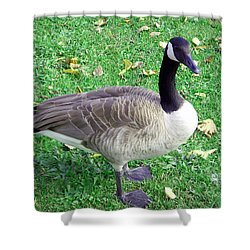 Canadian Goose Shower Curtain by Aimee L Maher Photography and Art Visit ALMGallerydotcom