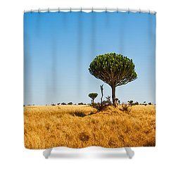 Candelabra Trees Shower Curtain by Adam Romanowicz
