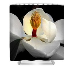 Candle In The Wind Shower Curtain by Karen Wiles