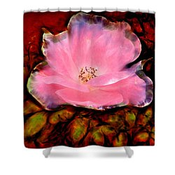 Candy Pink Rose Shower Curtain by Lilia D