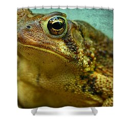 Cane Toad Shower Curtain by Michael Eingle