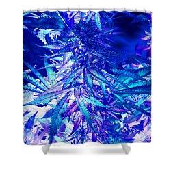Canna Blues 8 Shower Curtain