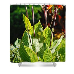 Canna Lily Shower Curtain by Optical Playground By MP Ray
