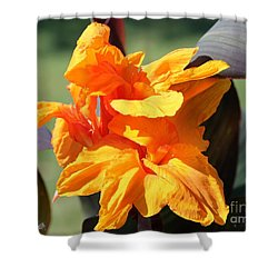 Canna Lily Named Wyoming Shower Curtain by J McCombie