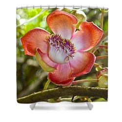 Cannonball Tree Flower Hawaii Shower Curtain by Venetia Featherstone-Witty