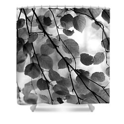 Canopy Shower Curtain