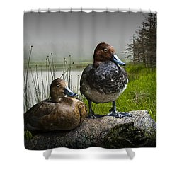 Canvasback Duck Pair By A Pond Shower Curtain by Randall Nyhof