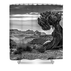 Canyon And Twisted Pine Shower Curtain by Lori Grimmett