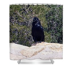 Canyon Raven Shower Curtain