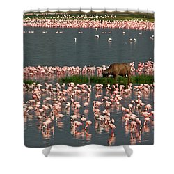 Cape Buffalo And Lesser Flamingos Shower Curtain by Panoramic Images